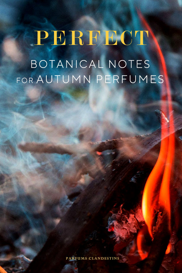 Perfect botanical notes for autumn perfumes