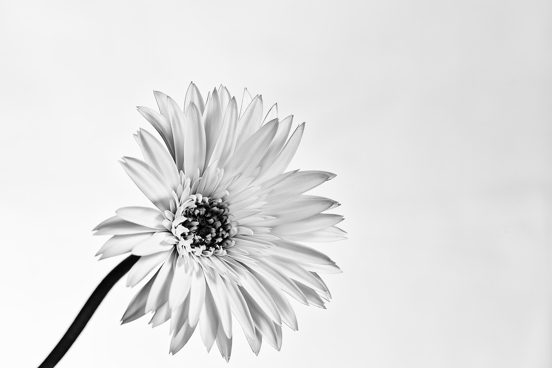Sustainable perfume blog post