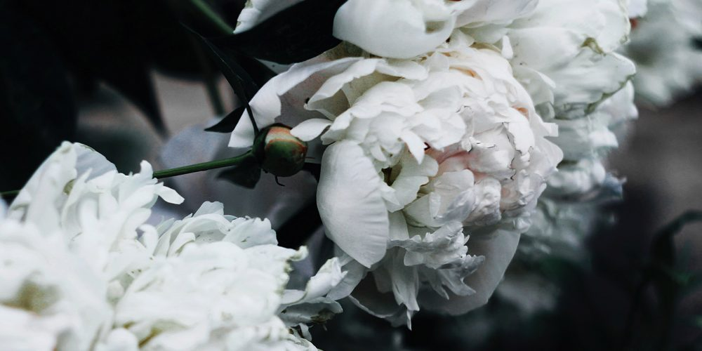 White Floral Fragrances & their Narcotic Notes